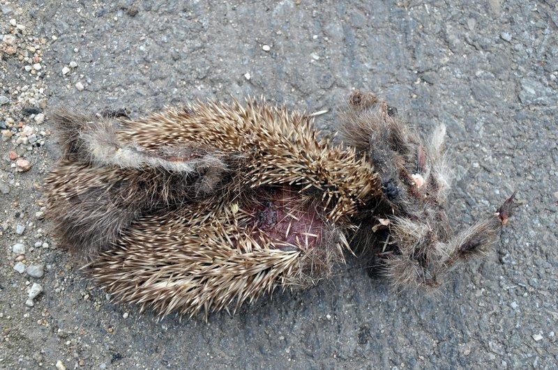 døde dyr på vejen