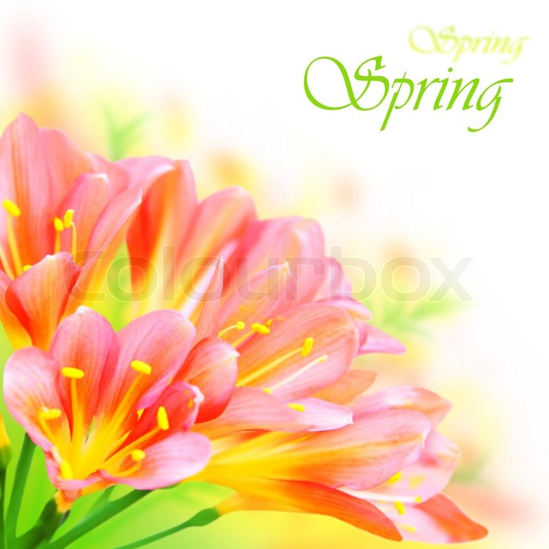 Fresh Spring Flowers Border Isolated On Stock Photo Colourbox