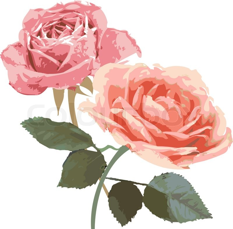 Retro vintage roses illustration isolated stock photo for Retro images