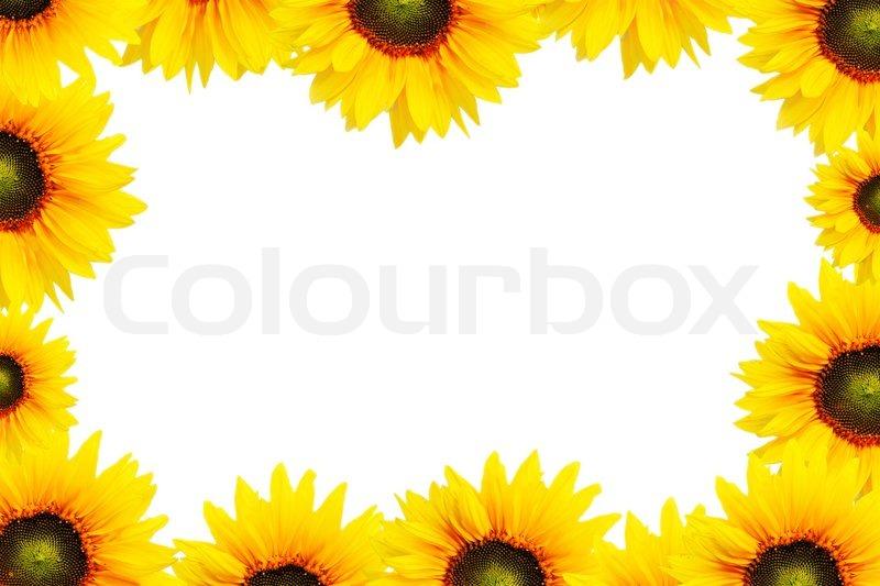 Sunflower Frame Sunflower Frame
