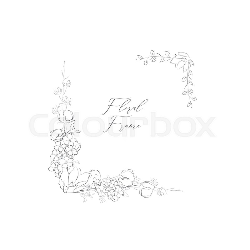 Simple Line Drawing Floristic Frame Stock Vector Colourbox