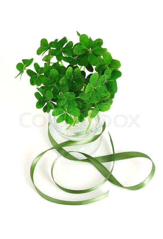 Bouquet of false shamrock with green ribbon stock photo for Irish mail cart plans
