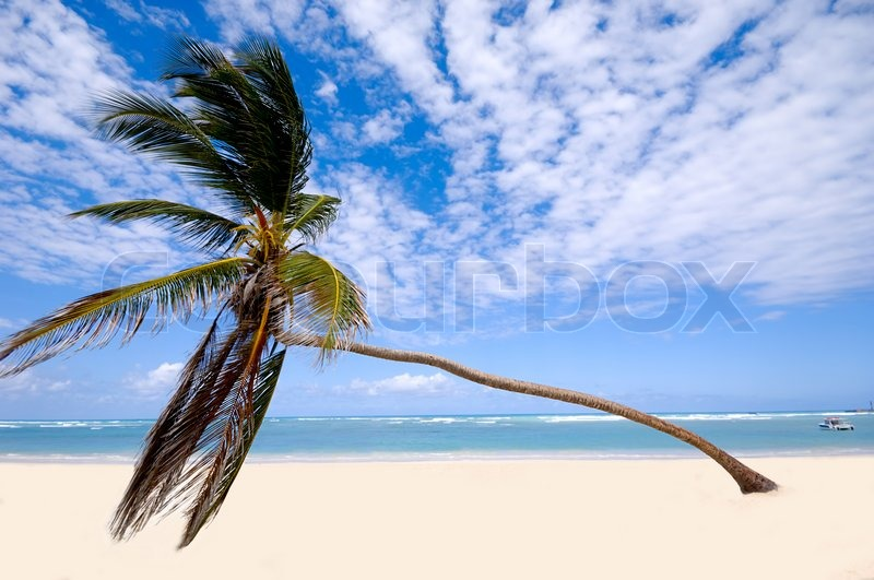 palm hanging over exotic caribbean beach with the coast in the