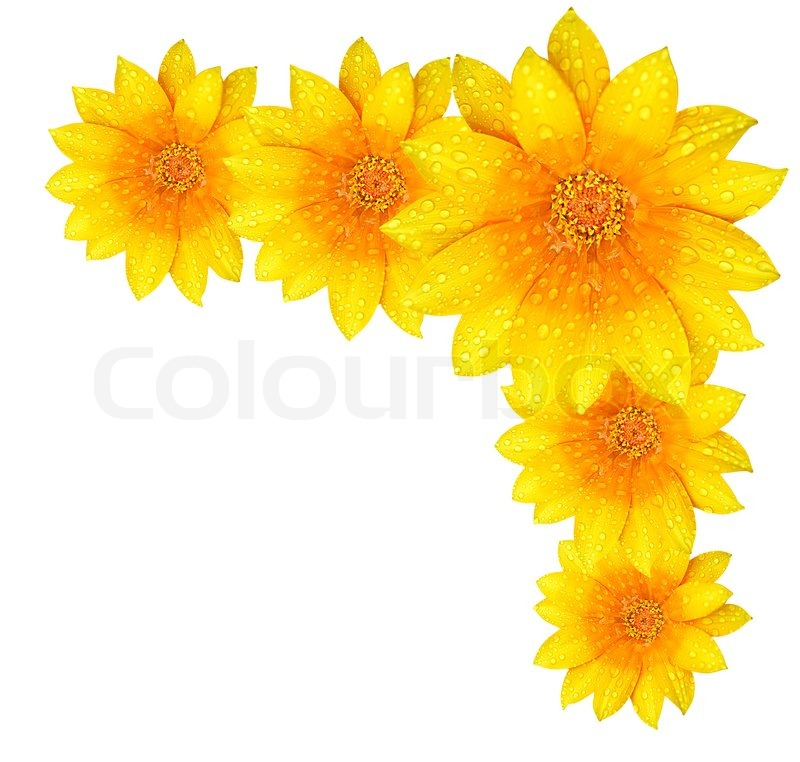 Yellow Flower Border Stock Photo Colourbox