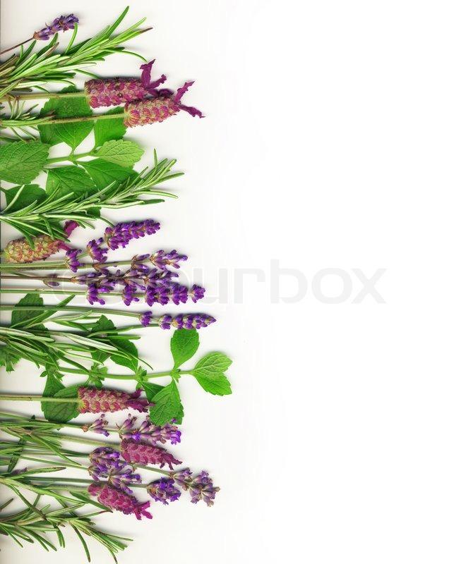 Herb Border On White Including Stock Photo Colourbox