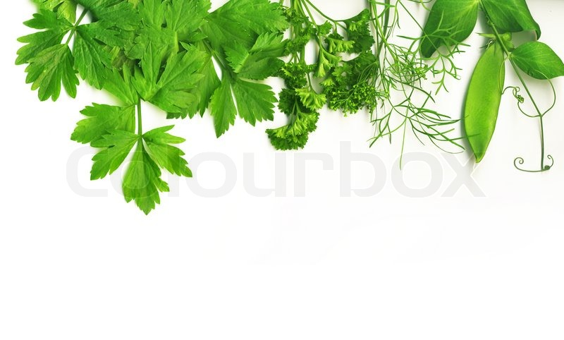 Border of fresh herbs including dill peas basil thyme sage parsley and oregano stock - Tips planting herbs lovage parsley dill ...