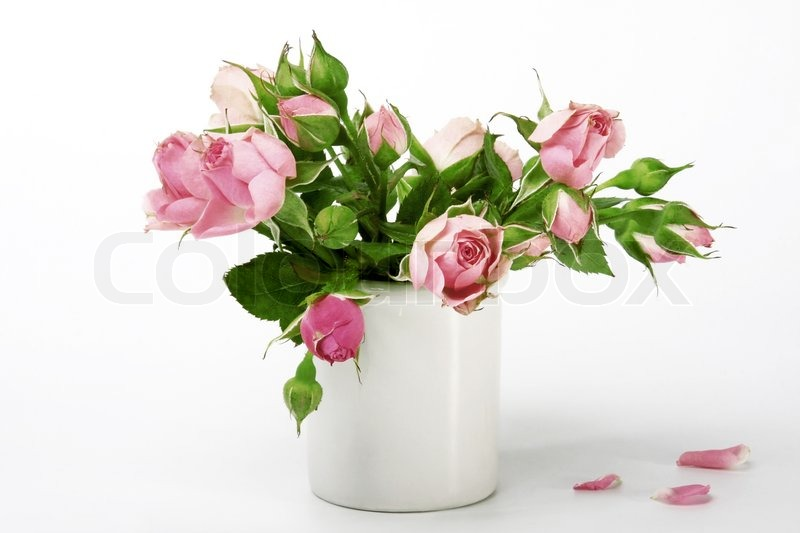 Roses In A Small Vase Isolated On White Background Stock Photo