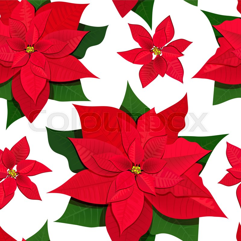 Poinsettia Flowers Colored Vector Stock Vector Colourbox