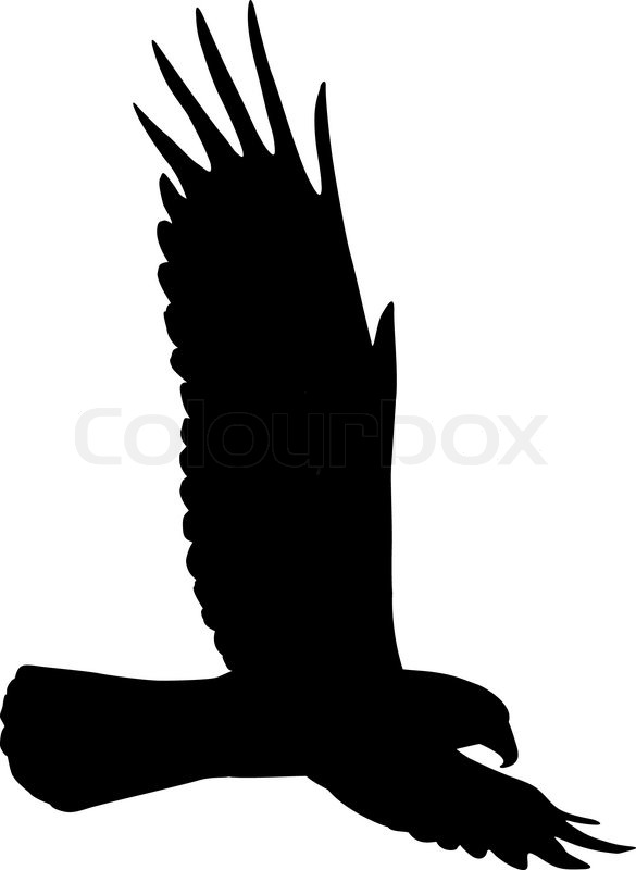 flying eagle stock vector colourbox