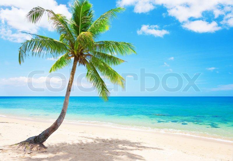 Beautiful Beach With Coconut Palm Koh Lanta Thailand