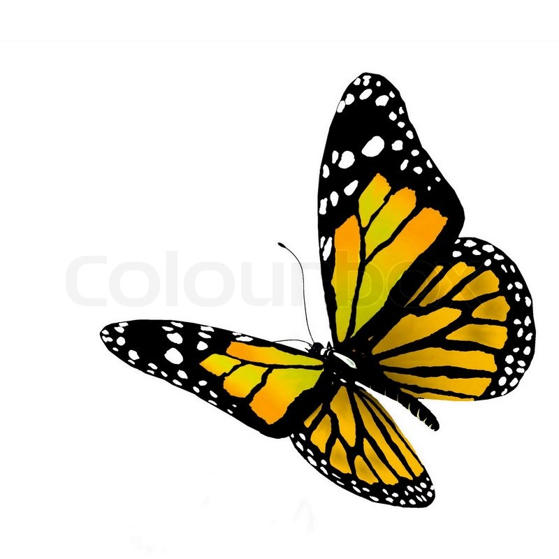 butterfly on yellow color - photo #1