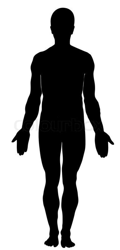 Male human anatomy stock vector colourbox male human anatomy vector ccuart Image collections