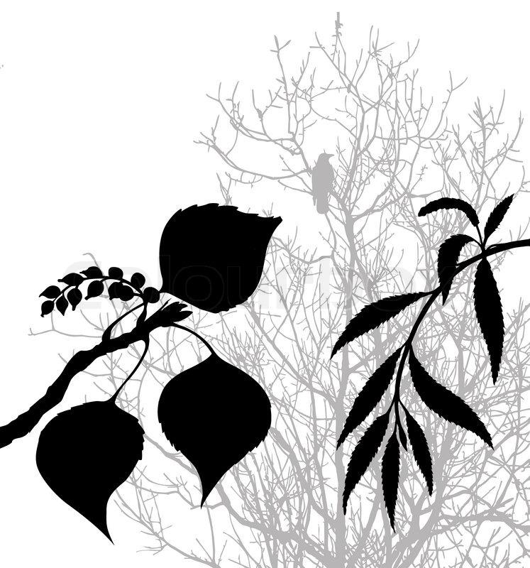 Tomato Plant Silhouette Plants Silhouette on White