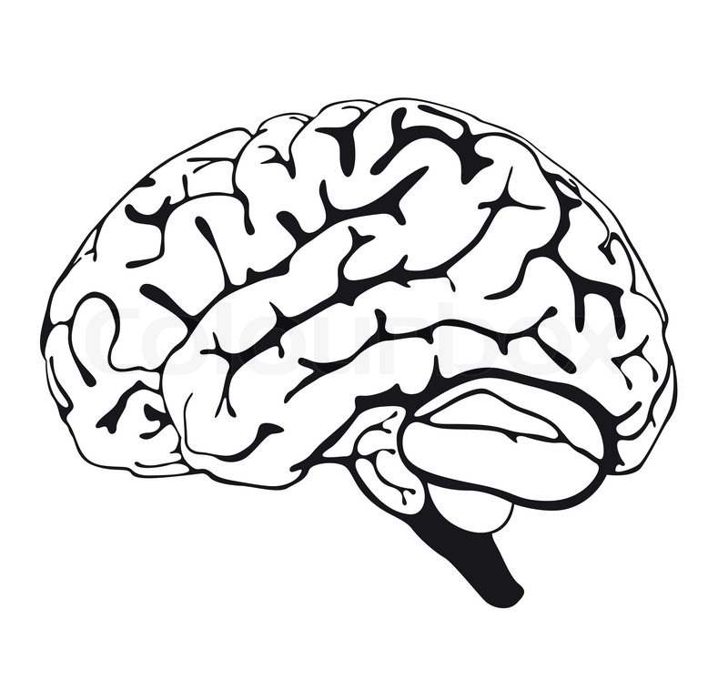 It is a photo of Irresistible Brain Line Drawing