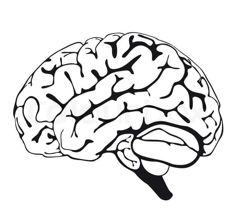 brain line drawing top - photo #20