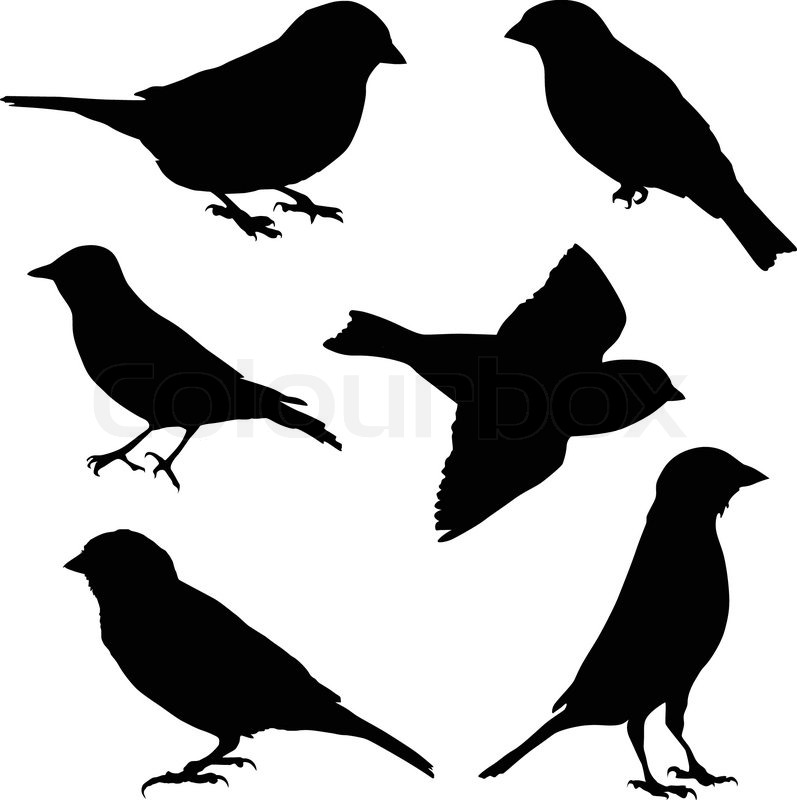 set of vector images sparrow stock vector colourbox