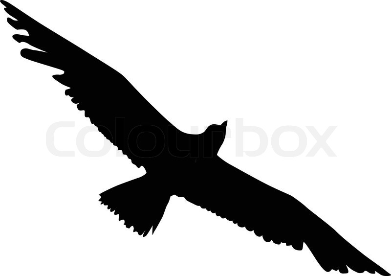 silhouette of an albatross stock vector colourbox