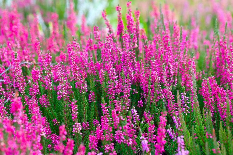Pink flowers in the springtime outdoor photo stock photo colourbox mightylinksfo