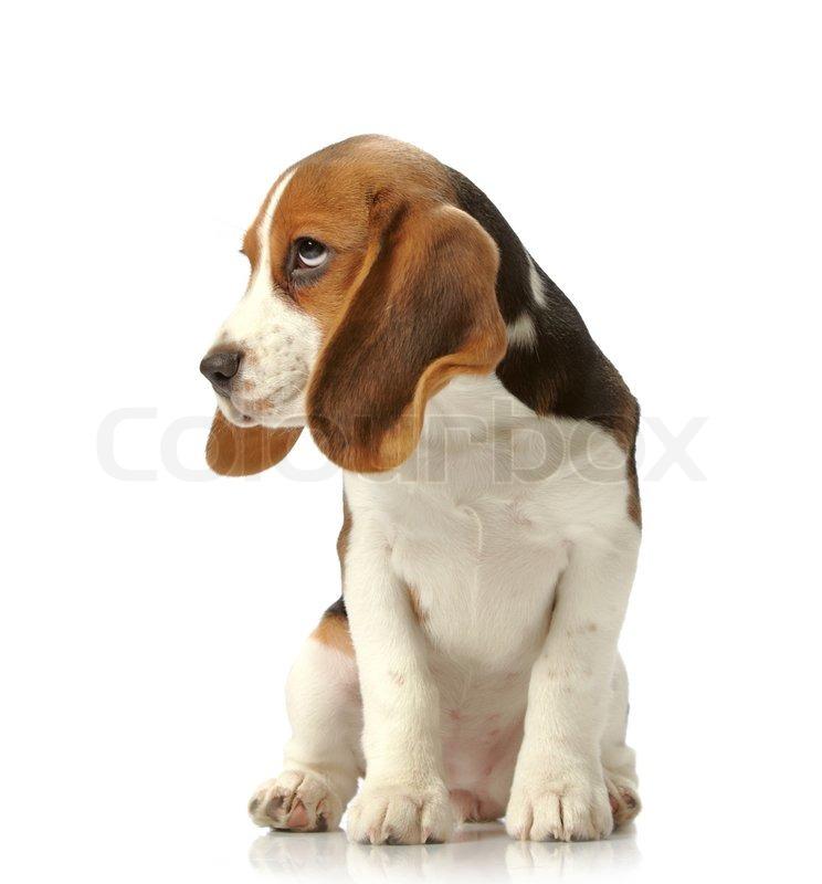 Bulldog Property Management
