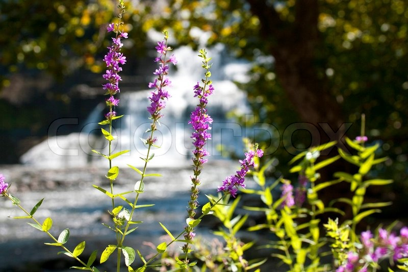Beautiful summer flower background pictures
