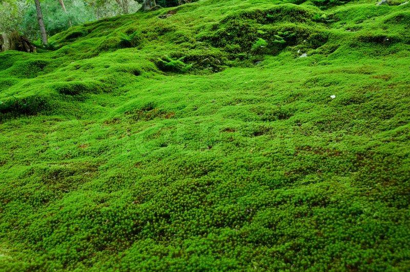 Natürliche Teppich aus Moos  Stockfoto  Colourbox
