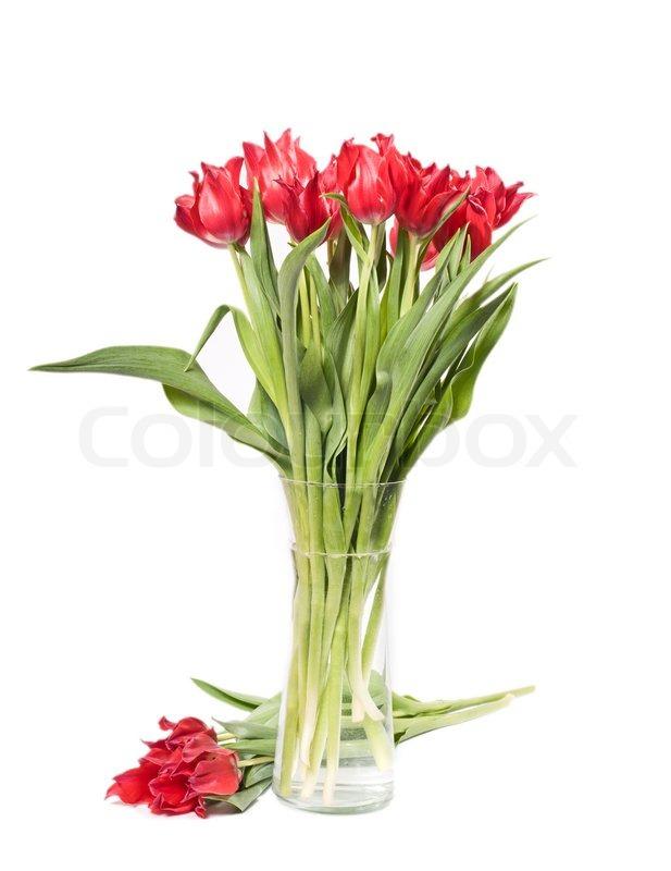 sch ne rosa tulpen in der vase auf wei em stockfoto colourbox. Black Bedroom Furniture Sets. Home Design Ideas