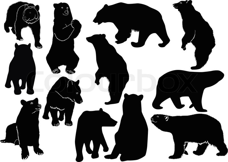 collection of animal vector bears stock vector colourbox rh colourbox com beer victoria beer vector free