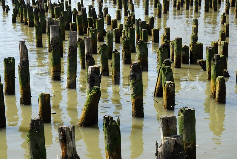Old piling stumps off the shore in new york harbor stock for Dock pilings cost