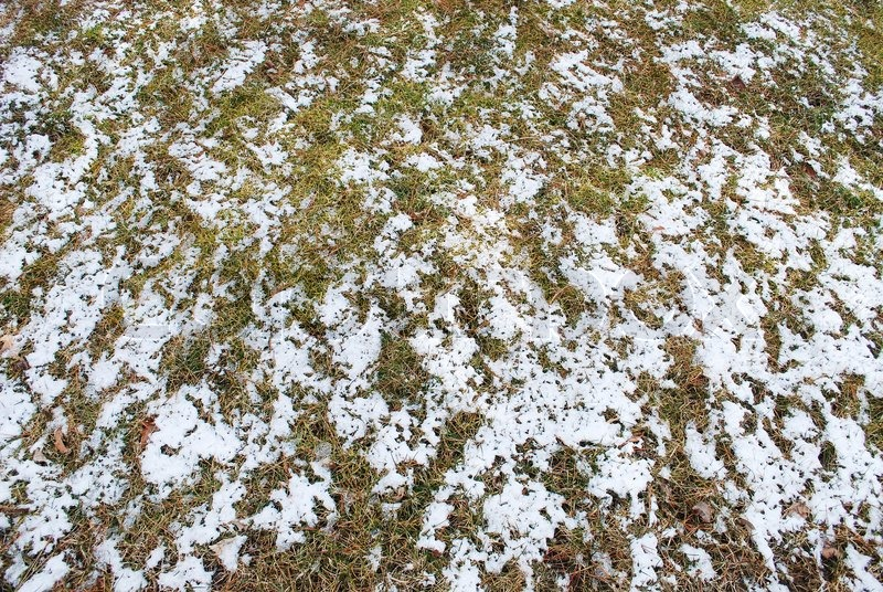 Snow Cover Grass