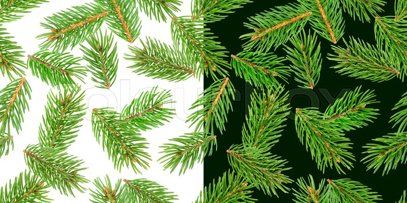 Fir tree branches seamless pattern, pine branch, Christmas conifer isolated on white and green background, New Year winter pattern, stock photo