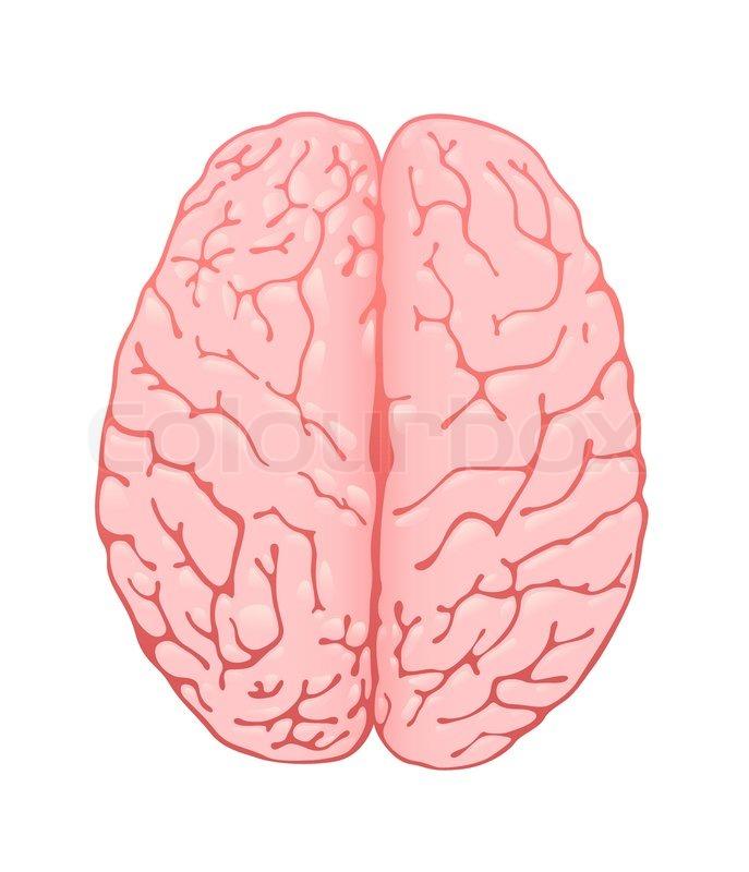 brain top view vector -#main
