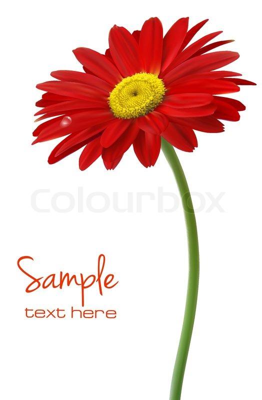 Schöne rote Blume vor dem weißen Hintergrund Vektor | Vektorgrafik ...