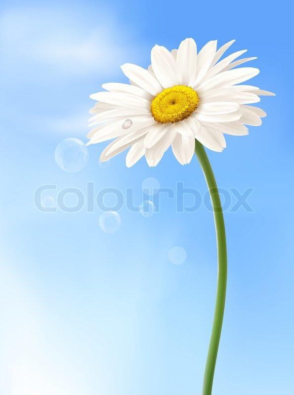 eskorte leverandør daisy