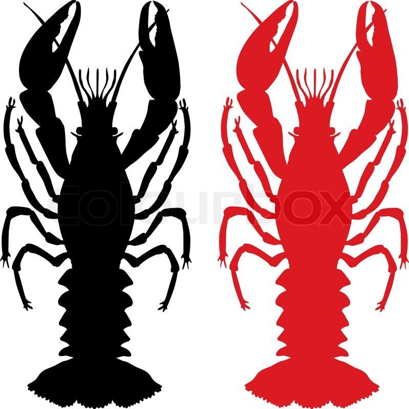 Crawfish | Vector | Colourbox
