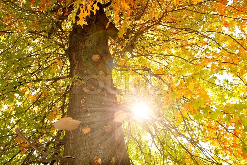 The tree in the sun, stock photo
