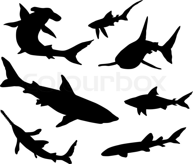 Sharks Silhouettes Vector 3651291 furthermore Fishparts additionally Food Chains And Webs furthermore Coloring Book For Children Elephants Gm498995982 79969495 additionally Fairy Coloring Pages For Adults. on wild water fish