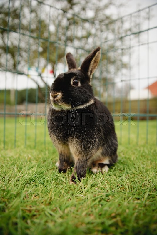 Close-up of a pet rabbit outdoors while in a cage, stock photo