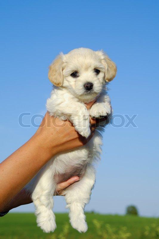 Sweet pups веб модель модели в каталоги работа