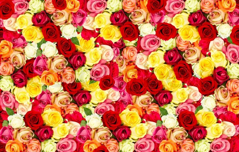assorted rosen bunte blumenwiese stockfoto colourbox. Black Bedroom Furniture Sets. Home Design Ideas