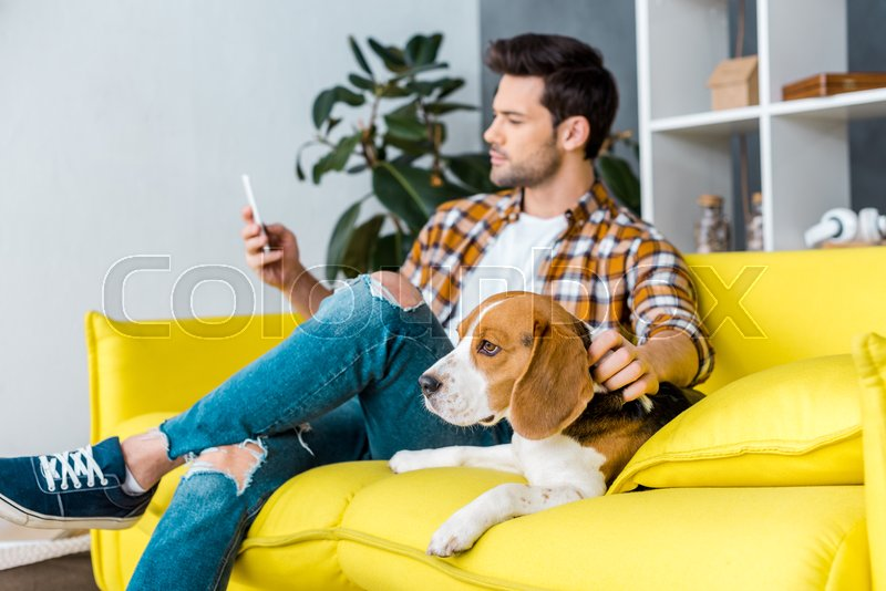 Selective focus of beagle dog and man with smartphone, stock photo