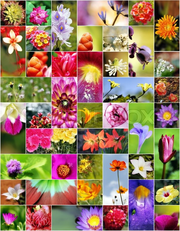 Stock image of 'Collage of flowers in different shapes, colors and designs'