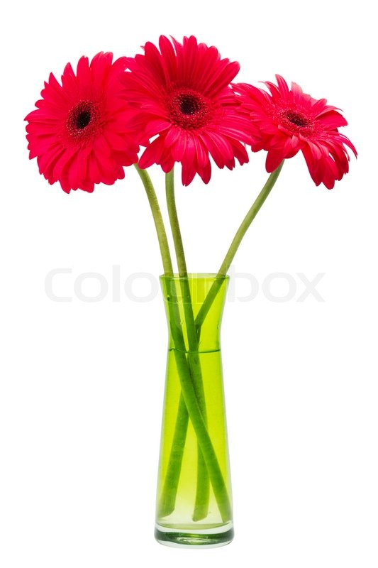 Three Red Gerber Flowers Gerbera Daisies In Green Vase Isolated