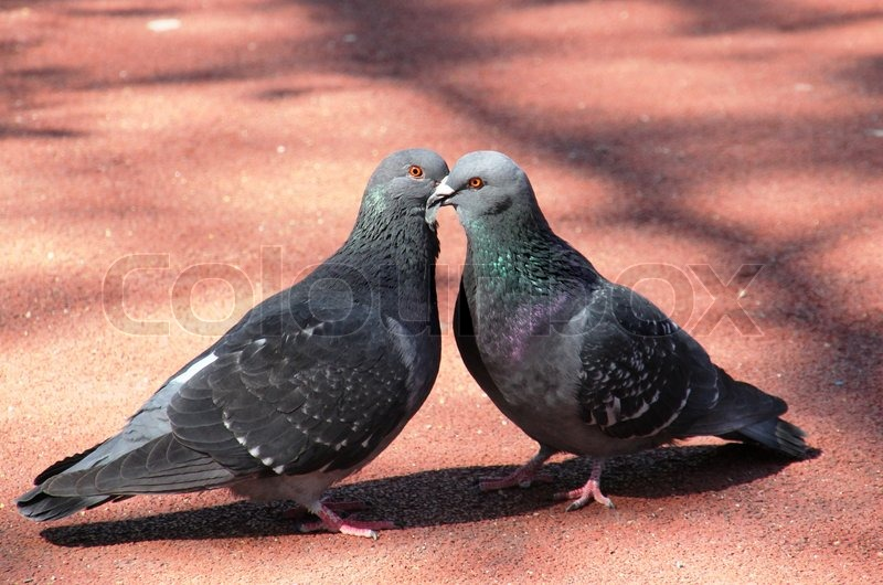 The 23rd South African Million Dollar Pigeon Race.