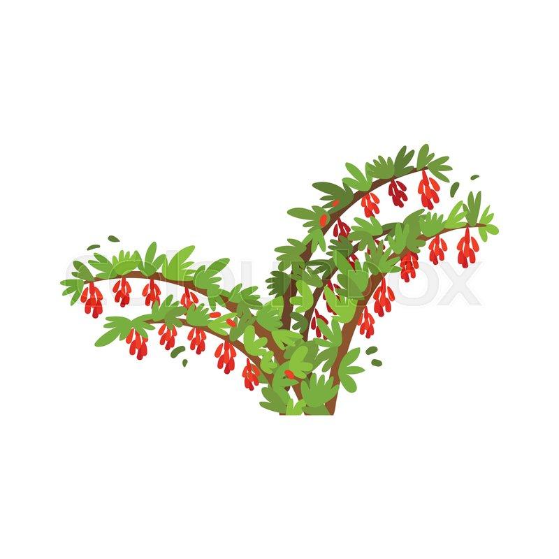 Fresh Goji Berries On Green Bush Stock Vector Colourbox