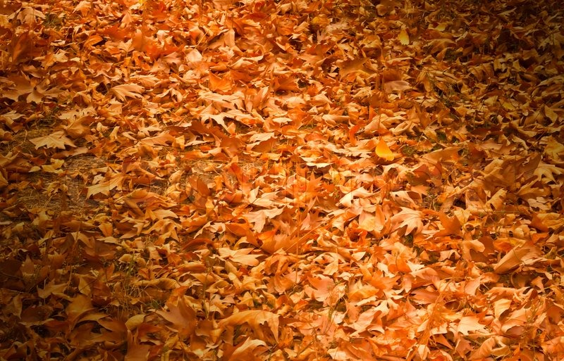 Excellent Thick yellow rug of autumn leaves | Stock Photo | Colourbox MD68