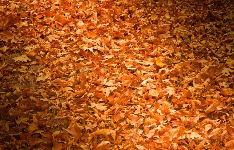 Dicke gelbe Teppich der Blätter im Herbst  Stockfot