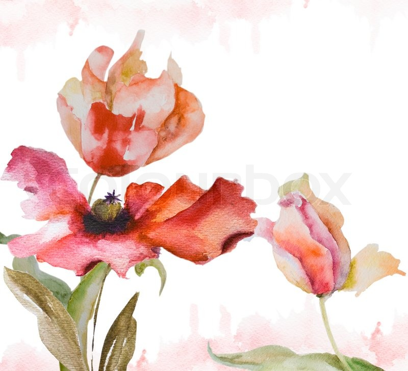 Watercolor background with tulips and poppy flowers stock photo watercolor background with tulips and poppy flowers stock photo colourbox mightylinksfo
