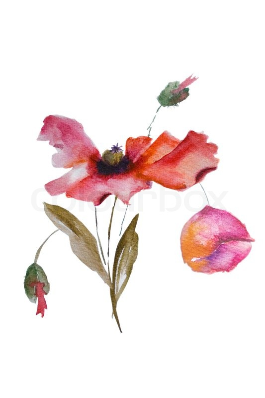Watercolor poppy flower stock photo colourbox mightylinksfo