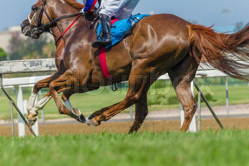 Race horses jockey\'s running grass track closeup animal bodies action, stock photo