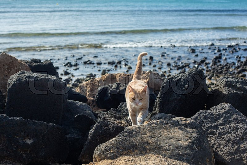 Beautiful red cat among the stones on the beach, stock photo